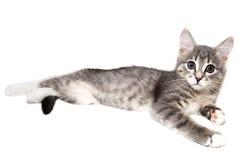 Лож кота Стоковая Фотография RF