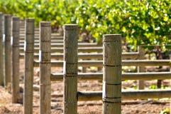 лоза виноградин Стоковые Изображения RF