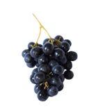 лоза изолированная виноградиной Стоковое Изображение