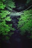 лоза моста Стоковое Фото