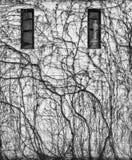 Лоза покрыла стену здания в черно-белом Стоковая Фотография RF