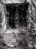 Лоза покрыла окно Стоковое Изображение