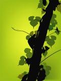 Лоза растя на векторе дерева Стоковое Фото