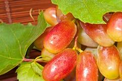 лоза росы ягод Стоковое фото RF