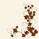 лоза силуэта виноградины Стоковое Фото