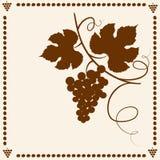 лоза силуэта виноградины Стоковые Фотографии RF