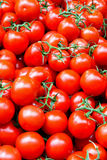 лоза томата стоковая фотография rf