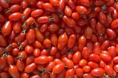 лоза томатов вишни малая Стоковое Изображение