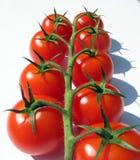 лоза томатов вишни Стоковая Фотография