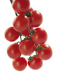 лоза томатов вишни Стоковое Фото