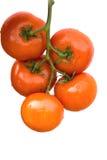 лоза томатов Стоковое Фото