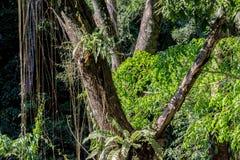 Лозы в лесе Стоковые Фото