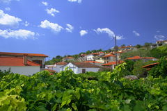 лозы Греции виноградины Стоковое Изображение RF