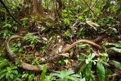 лозы джунглей стоковое фото rf