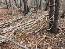 Лозы и ветви Стоковое Фото