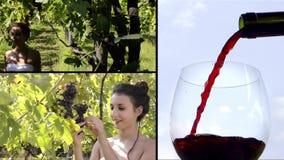 Лозы и вино видеоматериал