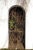 лозы перерастанные аркой Стоковая Фотография RF