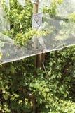 Лозы под пластичными сетями для защиты горы kanonkop Африки известные приближают к рисуночному южному винограднику весны стоковые фотографии rf