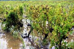 Лозы потока Стоковое Фото