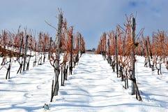 лозы снежка Стоковые Фотографии RF