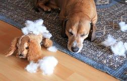 ломать игрушку спать собаки Стоковое Фото
