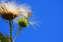 ломать свободные семена Стоковые Изображения