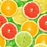 ломтики картины motley цитрусовых фруктов безшовные Стоковая Фотография RF