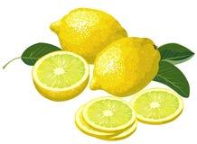 ломтики лимонов Стоковое Фото