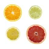 ломтики цитрусовых фруктов Стоковое Изображение RF