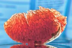 Ломтик грейпфрута Стоковые Фото