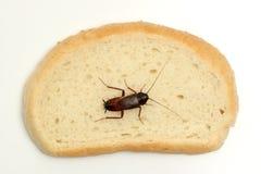 ломтик таракана хлеба Стоковое Изображение RF