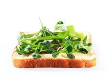 Ломтик хлеба с свежими зелеными цветами салата Стоковые Фото