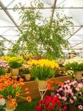 ЛОНДОН, ВЕЛИКОБРИТАНИЯ - 25-ОЕ МАЯ 2017: Выставка цветов 2017 RHS Челси Стоковые Изображения RF