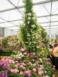 ЛОНДОН, ВЕЛИКОБРИТАНИЯ - 25-ОЕ МАЯ 2017: Выставка цветов 2017 RHS Челси Стоковые Изображения