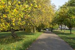 ЛОНДОН, ВЕЛИКОБРИТАНИЯ - 13-ОЕ НОЯБРЯ: Осень в садах Kensington с ногой Стоковое Изображение