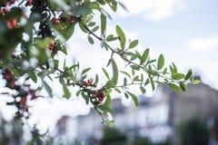 Лондон - ветви и дома Стоковое Фото