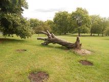 Лондон, дерево спать холма первоцвета парка стоковое фото