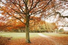 Лондон Autum, парк Ричмонд Стоковое Изображение