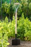 Лопата в почве Стоковая Фотография