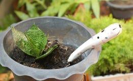 Лопата сада в пластичном баке завода с малыми заводами Стоковая Фотография RF