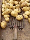 лопаткоулавливатель новых картошек Стоковая Фотография