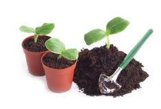 лопаткоулавливатель flowerpot пускает ростии детеныши Стоковое Изображение