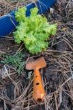 Лопаткоулавливатель с свежим зеленым цветом стоковые фотографии rf