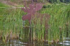 Лоси в Bulrushes Стоковые Фото