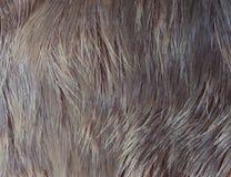 Лось шерстей макроса Стоковое фото RF