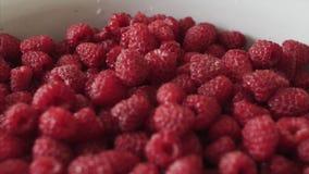 Лоток снятый ягод свежих органических поленики r сток-видео