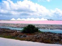Лоток соли в Бонайре Стоковая Фотография RF