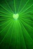 лотос листьев Стоковая Фотография RF