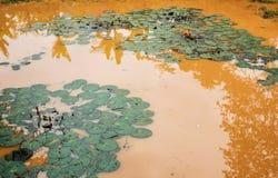 Лотос на пруде Стоковое фото RF