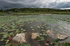 Лотос озера в плохой погоде Стоковая Фотография